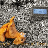 Title: Baby Victor <br /> <br /> Comments: Trinkets on a child's grave. <br /> <br /> Location: Zabcikville
