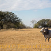 Title:<br /> <br /> Comments:<br /> <br /> Location:  Cestohowa, Texas
