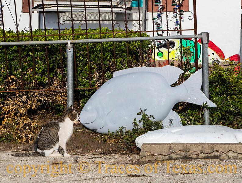 A  Cat Kissing a Fish