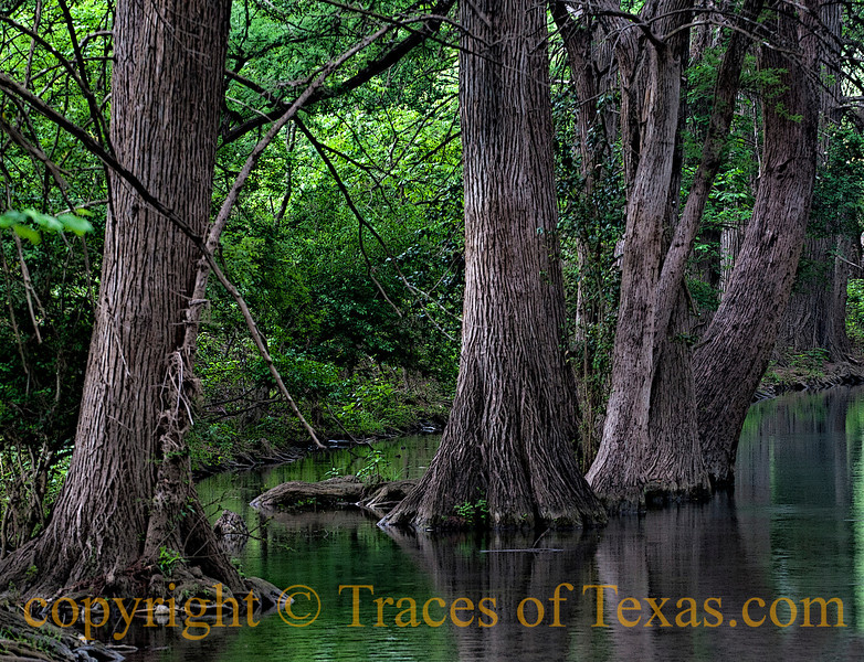 Title:  In the Texas of my Sleep<br /> <br /> Comments: What I dream about when I'm dreamin' good. <br /> <br /> Location: Guadalupe River