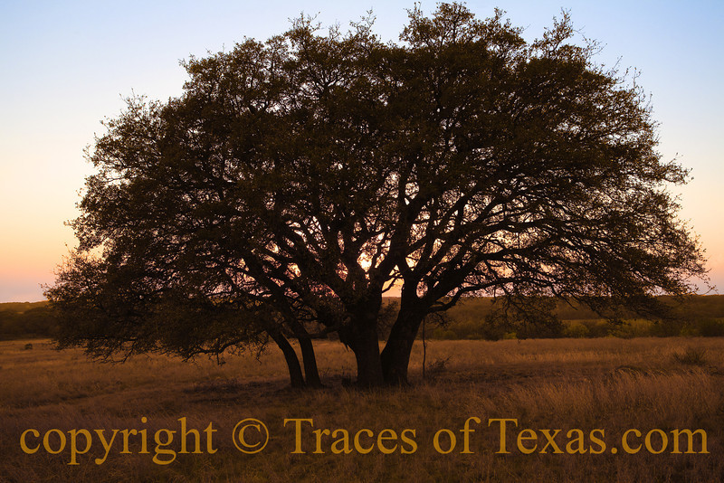 Title: Same as it Ever Was<br /> <br /> Comments:<br /> <br /> Location: Brownwood