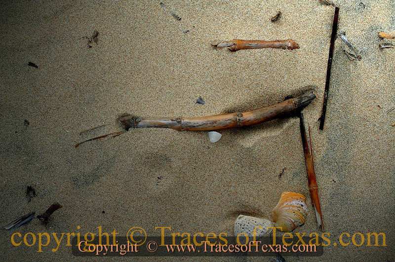 """Title:   I Finished Mahler's """"Unfinished Symphony,""""  but I did it in Sand and Shells.<br /> <br /> Comments: Random beach art on Matagorda Island.<br /> <br /> Location: Matagorda Island, Texas"""