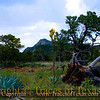 Title:   Agave Pondering Fallen Tree Pondering Mountain Pondering Sky Pondering Departing Rainstorm<br /> <br /> Comments: Big Bend National Park is full of surprises. If you've never been, you need to dust yourself off and git on out there!<br /> <br /> Location: Big Bend National Park
