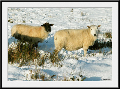 Porthmadog Winter
