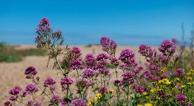 June 20th 2020 Walmer beach