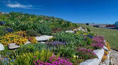 April 30th 2021.  Sandown castle gardens