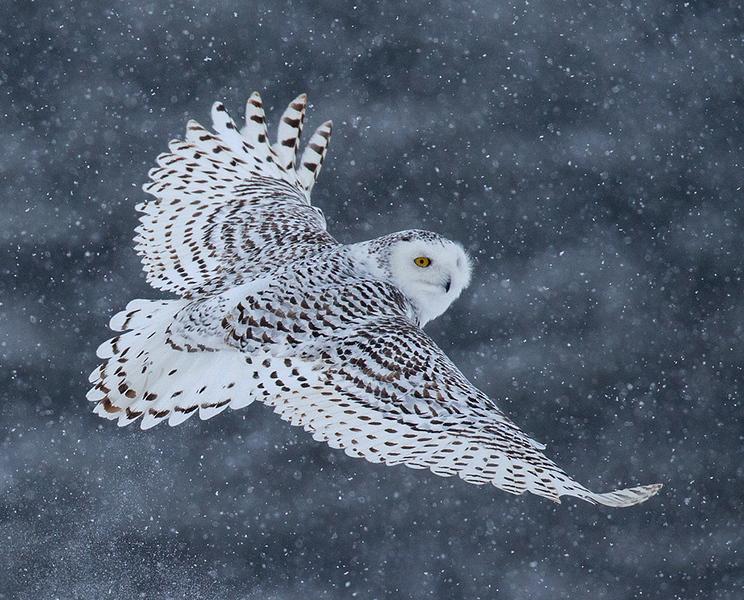 2015 The Winter Hunter by Neil Solomon