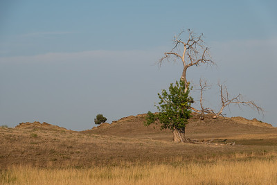 Tree and ridge line