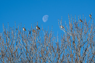 Birds in the branches