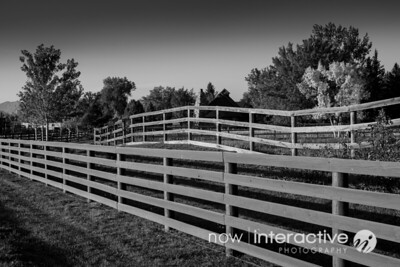 Fence and fall leaves in black and white