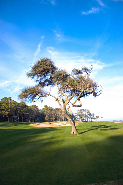 This tree on the Melrose Golf Course is simply incredible. It sits perched right on the sea and I have never seen another tree quite like it.<br /> Photo by,<br /> Daniel Straine