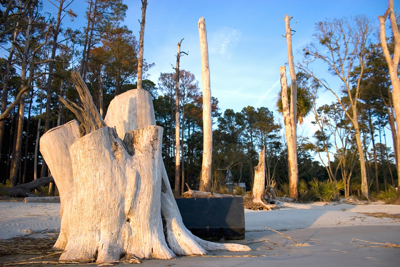 Bloody Point on Daufuskie Island is full of old pieces of driftwood and tangled fishing gear.<br /> Photo by,<br /> Daniel Straine