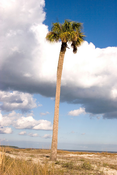 That palm tree must be lonely, but it reigns king on this beach.<br /> Photo by,<br /> Daniel Straine