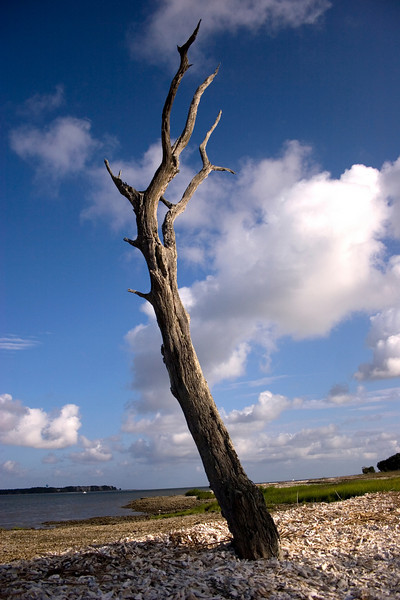 A tree stretches up to the sky.<br /> Photo by,<br /> Daniel Straine