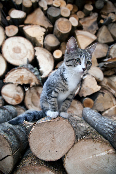 Our cat Cedar getting ready to chase a ladybug on a log. She loves to play around in the woodshed.