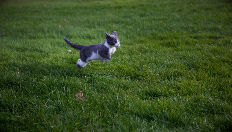 Our cat Baxter playing around in soft green grass.
