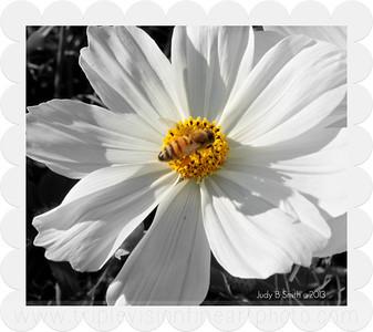 White Pollinator