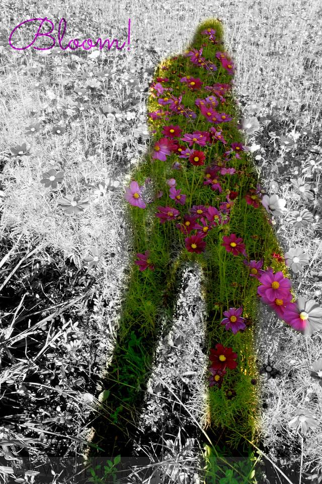 IMG_3834 cosmo shadow self bloom