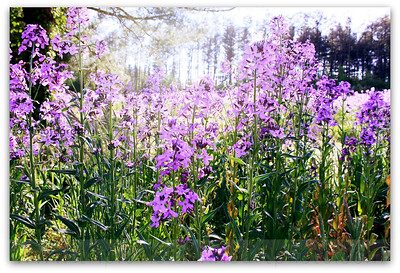 purple flowers drenched in sun