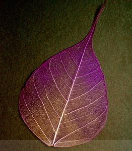 Raspberry Hombre Bodhi Leaf Life Lines