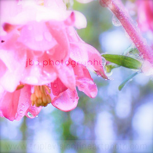 saturate b4 blooming