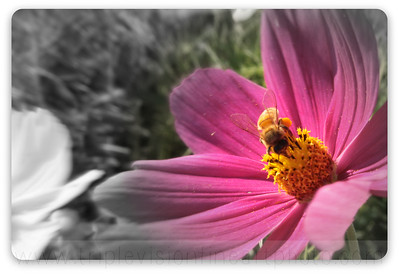 Pollinating it Pink!