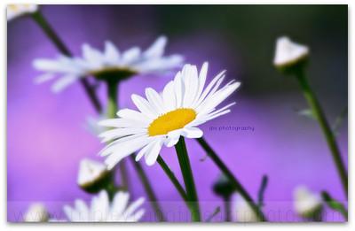exit+17+daisy+ipad-3552906950-O