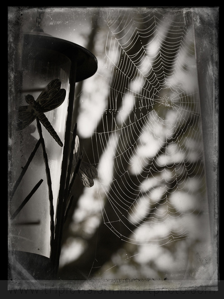 web daguerro IMG_3983