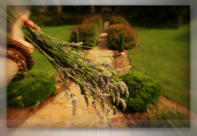 Fistful of Lavender