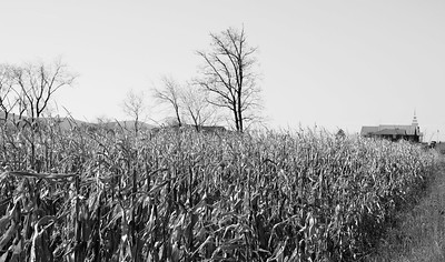 November Corn and Distant Church