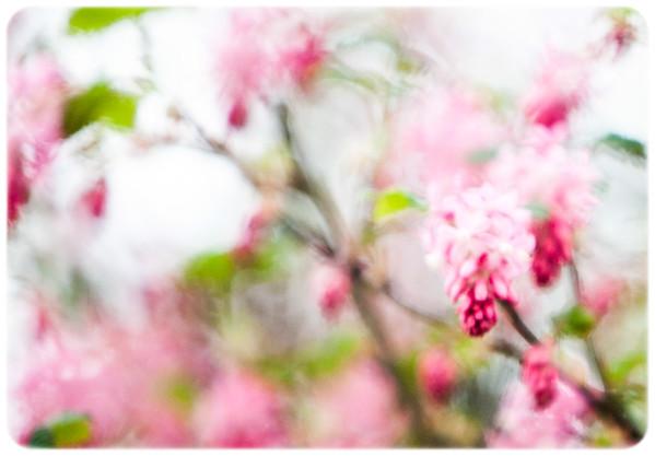 Flowers & The Macro World