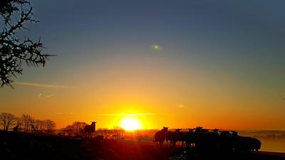 Winter Sunrise Over North Molton