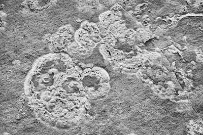 Sandstone texture. Taken in South Coyote Buttes,  Vermilion Cliffs National Monument, Arizona, USA.