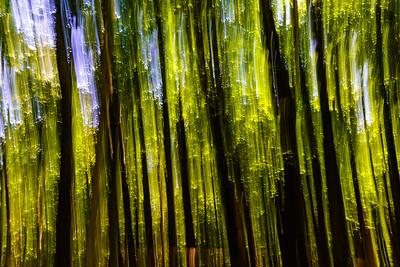 Woodland Abstract Accord, NY