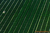 Crops in south-western Miami-Dade County, west of Homestead