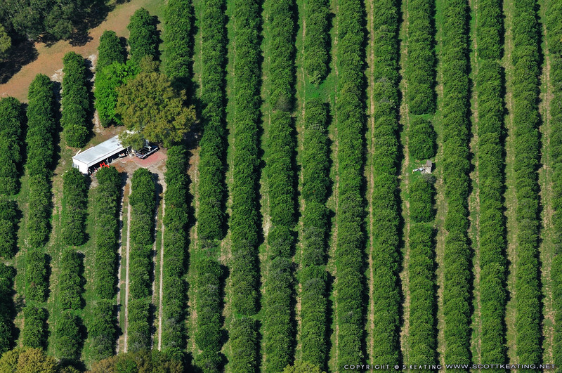 Citrus Groves - Lake Bonny, Florida