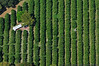 Citrus Groves - Lake Bonny, Florida