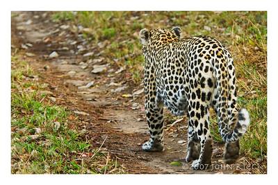 Leopard Butt