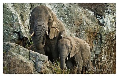 Mom Elephant & Baby