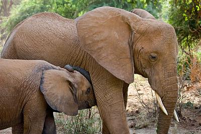 """Baby Elephant and Mother""  Samburu National Reserve, Kenya."