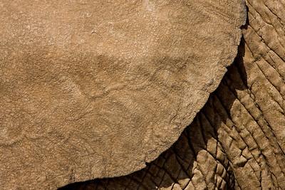 """Elephant Texture II""  The ear and side of a large African elephant.   Samburu National Reserve, Kenya."