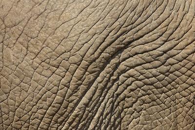 """Elephant Texture I""  Samburu National Reserve, Kenya"