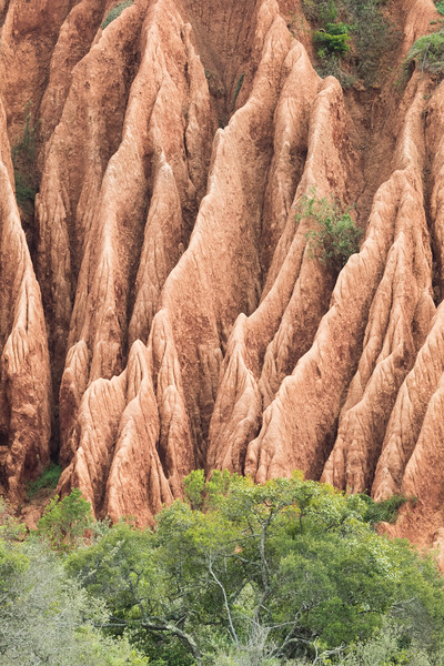 Eroded formations on a hillside. Taken in Addo Elephant National Park, South Africa, Africa.