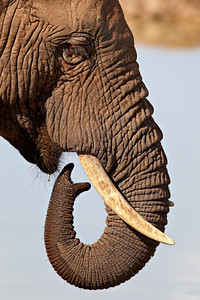 """Tusk and Trunk Curves"""
