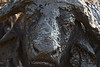 """One Of The 'Ugly Five'""<br /> <br /> Some people go to Africa to see the ""Big Five."" And some go to see the ""Ugly Five."" This guy is on both lists. A cape buffalo (Syncerus caffer) male rises from his mud bath. The cape buffalo is also known as the African buffalo. Taken in the HluhluweGame Reserve, South Africa, Africa."