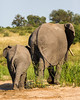 An African elephant (Loxodonta africana) mother with her young. Taken in Kruger National Park, South Africa, Africa. The species is listed as vulnerable on the IUCN Red List of Threatened Species at iucnredlist.org.