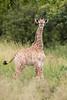 """*Very* Young Giraffe"""