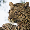 """""""Leopard Eyes"""""""