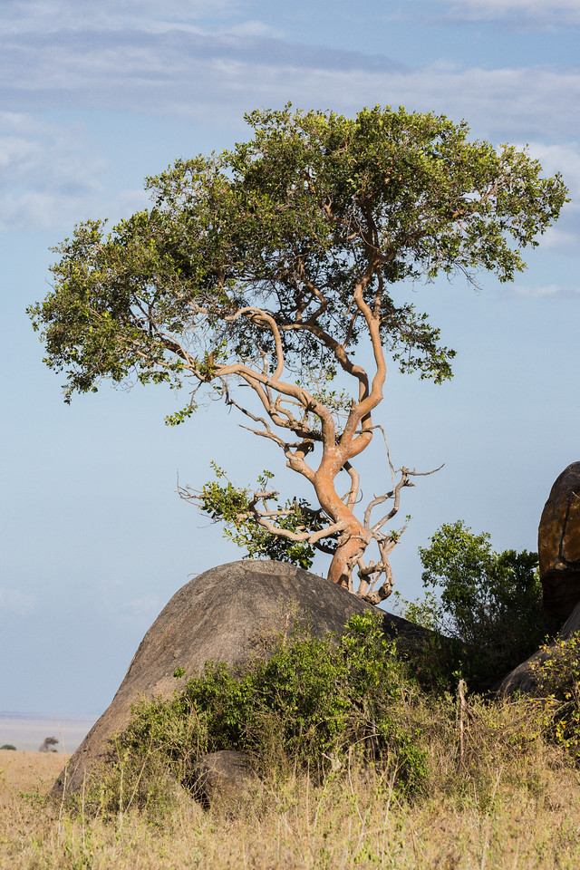 Taken in the Central Serengeti, Tanzania, Africa.
