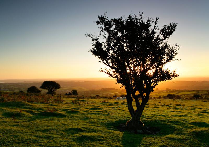 Dartmoor Tree Silhouette at Sunset